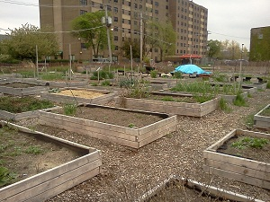 Harambee as it stood April 14. In a few weeks the area will be ripe with vegetables, herbs and other edibles.