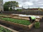 Thumbnail image for Fresh from the PCC Austin community farm