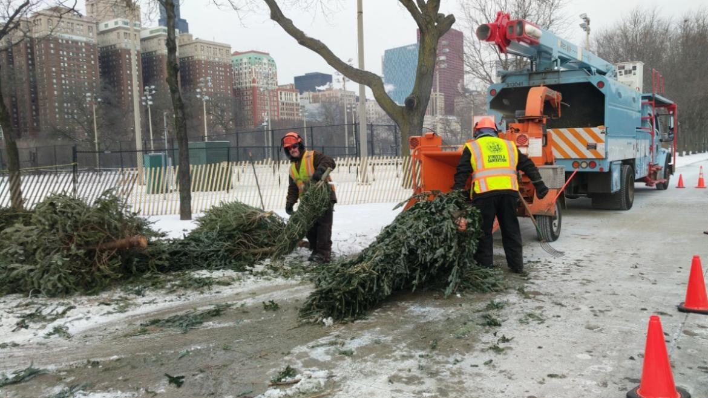 Christmas Tree Recycling Program Begins Austintalks